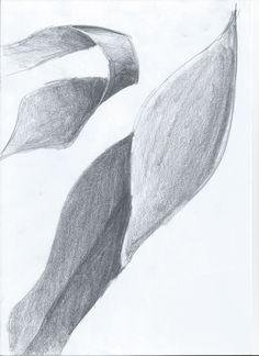 Sketch_Kelp17