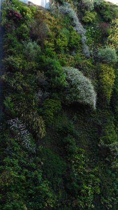 Musgos plantas y flores para perfumes pinterest for Jardin vertical caixaforum