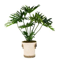 Creative Displays Silk Monstera Tree In an Embellished Container