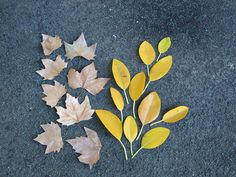 leaves i found in hyde park