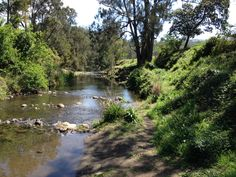 A little roadside camping spot on the banks of Christmas Creek, QLD.