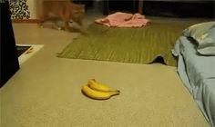 Bananas...not today