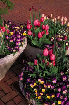 Spring Flower Containers