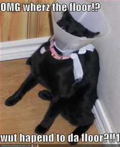 Silly Cat Pictures: Funny cat pics