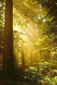 heavenly rays of light