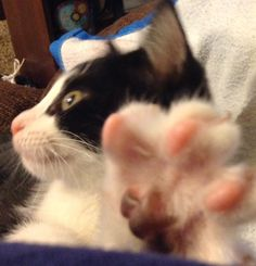 "Sassy Pants says ""Talk to the Paw""!!"