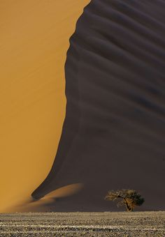 Lone Acacia, Sossusvlei Sand Dunes, Namibia. Photographed by Bob Bush of Altadena, California