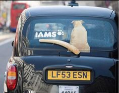 Guerrilla Marketing IAMS #pets