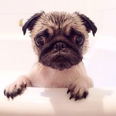 Little wet puppy face