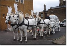 What is more romantic than a white Cinderella carriage pulled by white horses? Every brides dream!