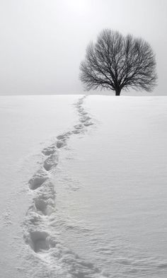 Footprints In The Snow ...