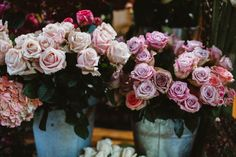 Rosas | Paris, Prada, Pearls, Perfume : Photo