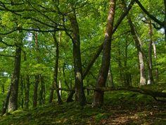 Heinrich Wilhelm: Grüner Eichenwald - Leinwandbild auf Keilrahmen