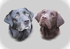 Marni and Hetty- Labradors. Digital Illustration.
