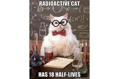 The Best of the Chemistry Cat Meme: Chemistry Cat - Optimist or Pessimist?You can find Chemistry cat and more on our website.The Best of the Chemistry Cat Meme: Chemistry. Chemistry Cat, Chemistry Help, Teaching Chemistry, Organic Chemistry, Chemistry Posters, Science Posters, Chemistry Classroom, Science Cat, Science Memes