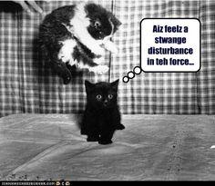 Ninja kitteh