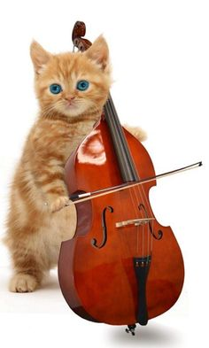"Kitten Ballroom Dancing:  Although still a junior division dancer, many eyes are already keeping a close watch on the talented ""Hey-Yo-Yo-Yo-Mr-Yo-Yo-Ma-zz"".  Both a waltz and tango dancer, little Hey Yo Yo also races vintage Mini Coopers, makes his own cheese and plays the cello."