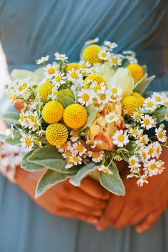 love the lambs ear and feverfew, the  shape of each flower plays off the next, complimentary