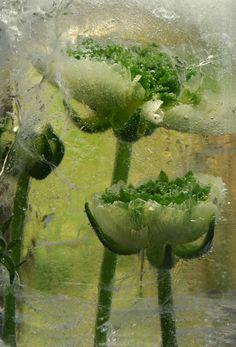 """""""Green Heart"""" by Karen Rexrode"""