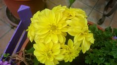 # yellow # flower
