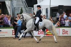Dressage with Andalusian Horse ( Photo:Suzan Faessen)