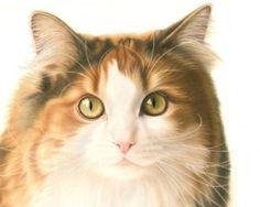 Kat-Portret-Lang-haar