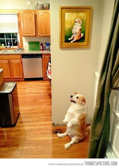 The best dog you'll see all day…