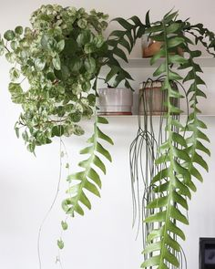 23 Stunning Indoor Hanging Plants to Inspire - Oh Cozy Nest Indoor Plant Shelves, Indoor Plants, Patio Plants, Casa Milano, Indoor Gardening Supplies, Decoration Plante, Plants Are Friends, Interior Plants, Interior Design