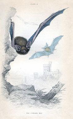 Instant Art Printable - Flying Bats - Halloween - The Graphics Fairy