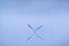 gull alighting - Ben Hall Photography