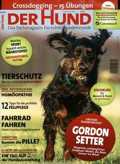 Tierschutz - Was tun, wenn Sie Quälerei sehen? Gefunden in: Der Hund, Nr. 4/2015
