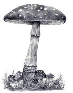 mushroom drawing~ I like mushrooms! Illustration Botanique, Botanical Illustration, Illustration Art, Mushroom Drawing, Mushroom Art, Pencil Art, Pencil Drawings, Art Drawings, Puzzle Photo