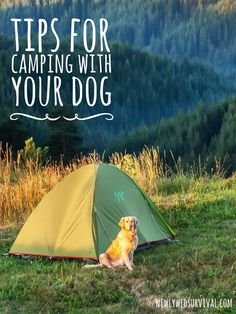 Learn from my mistakes! Things I wish I knew before camping with my dog #PinnacleHealthyPets #ad