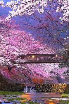 Kameoka Japan Cherry Blossoms Bridge Spring by SMGPhotoGallery Kawai Japan, Japan Honeymoon, Aesthetic Japan, Beautiful Places To Visit, Nature Wallpaper, Japan Travel, Amazing Nature, Beautiful Landscapes, Travel Photos