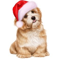 tubes chien chiot dog - Page 8 Merry Christmas Dog, Christmas Animals, Cute Little Puppies, Cute Puppies, Baby Animals, Cute Animals, Puppy Images, Cute Dog Pictures, Puppy Care