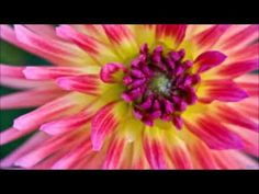 Abraham Hicks - Unblock Your Energy And Start Manifesting Now 2016 - YouTube