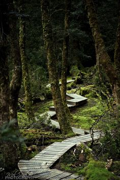 Rainforest walk at Cradle Mountain, Tasmania, Australia by Mel Sinclair on Australia Travel Honeymoon Backpack Backpacking Vacation Brisbane, Melbourne, Vacation Places, Places To Travel, Vacation Travel, Oh The Places You'll Go, Places To Visit, Tasmania Travel, Road Trip