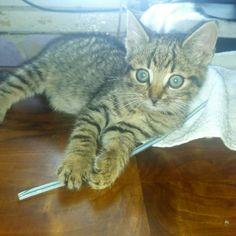 Mój kotek 😘