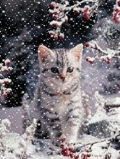 MOVING Snowing Cat in Winter Scene - Snowing Cat Gif -