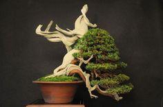 Técnicas para envejecer nuestros bonsais Dwarf Plants, Bonsai Plants, Bonsai Garden, Bonsai Trees, Bougainvillea Bonsai, Conifer Trees, Deciduous Trees, Bonsai Artificial, Junipero