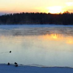 Såg kallt ut att vara and idag men vackert. #umeazing #alskanorrland #nofilter