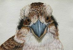 A gallery of all the Birdland Series pastel drawings by artist Rachel Newling, portraits of Australian birds. Bird Artists, Bird Artwork, Bird Paintings, Australian Animals, Australian Artists, Bird Embroidery, Watercolor Animals, Watercolour, Watercolor Paintings