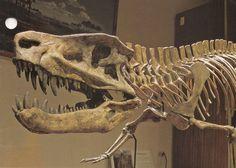 """True to their prehistoric focus, Arizona's Petrified Forest National Park boasts a full Postosuchus skeleton mold."""