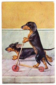 This not only is possible, its plausible...our pair, pound for pound, pull as hard as any two sled dogs...there should be a dachshund division in the Iditarod!