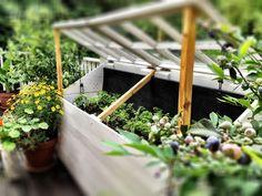 Urban Farm/Garden Install Company
