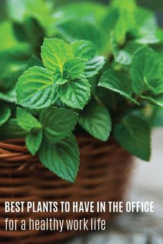 It's no secret that work can be stressful, especially when you're constantly worried about incontinence. Stock up on Depend® incontinence products to feel more confident each day at the office. Here is a list of the best plants to keep in your office for a healthy work life. A little freshness is sure to add some calm vibes to your desk!