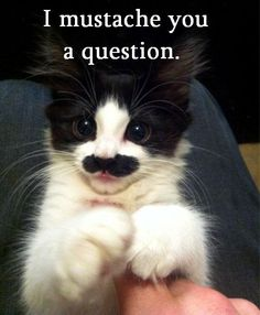 I had a cat that looked alot like this- he had the stache, but also looked like he had a top hat on!