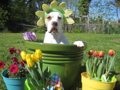The best Easter/Passover/Spring flowers you'll ever find!  https://www.facebook.com/#!/pages/Charlie-Bleu/215940311767362