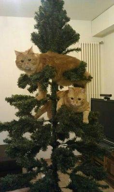 #кошка#новый год# ёлка