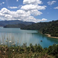 Malborough Sounds Honeymoon In New Zealand, Summer Months, Homeland, Beautiful Homes, River, Amazing, Places, Outdoor, Sweetie Belle